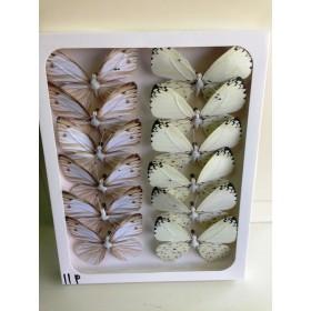 Пеперуди - бели 11см