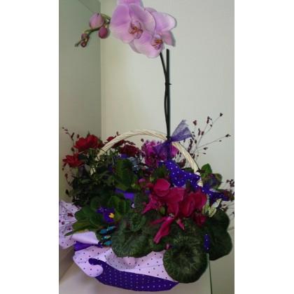 Кошница с орхидея от www.cvetarski.com